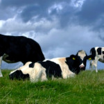 Czy mleko jest szkodliwe?