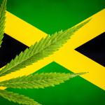 Niemieccy naukowcy: medyczna marihuana leczy raka i wzmacnia system odpornościowy
